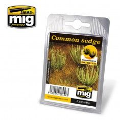 COMMON SEDGE A.MIG-8456