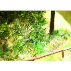 Ziterdes: Fern (9 Plants) (6079550)